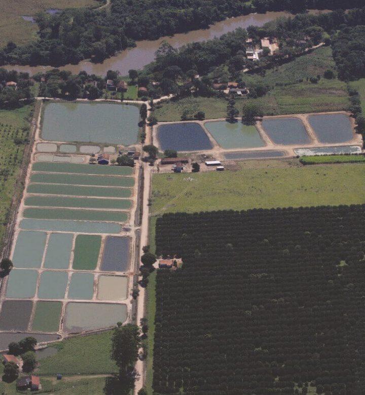 Piscicultura Aquapeixe Conchal SP